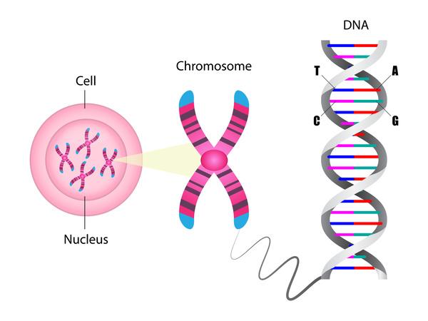 染色体とDNA
