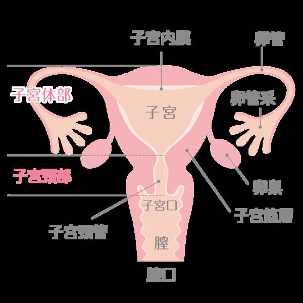 子宮の各名称